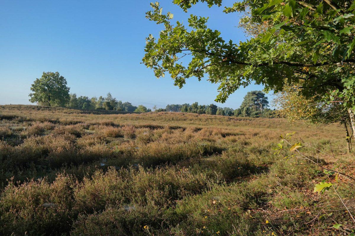 Ein spätherbstlicher Spaziergang durch die Westruper Heide