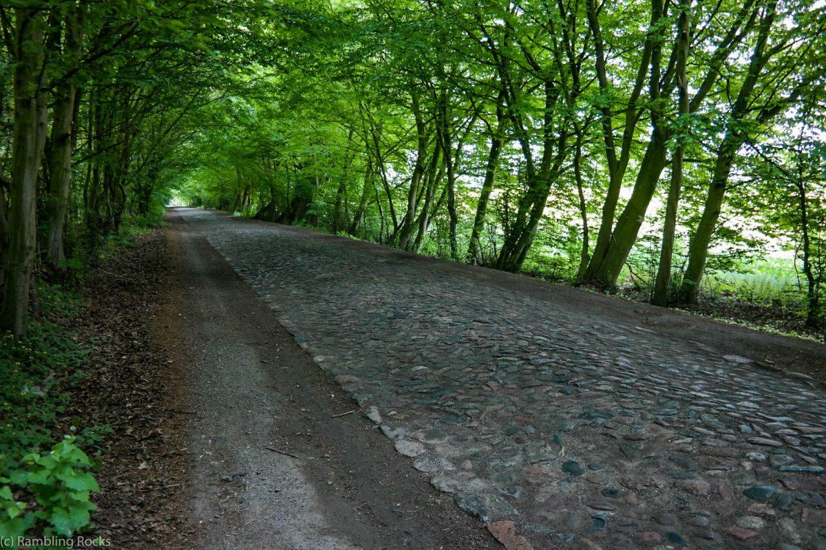 Rettet die grünen Tunnel in Deutschland! (#TagderAllee)