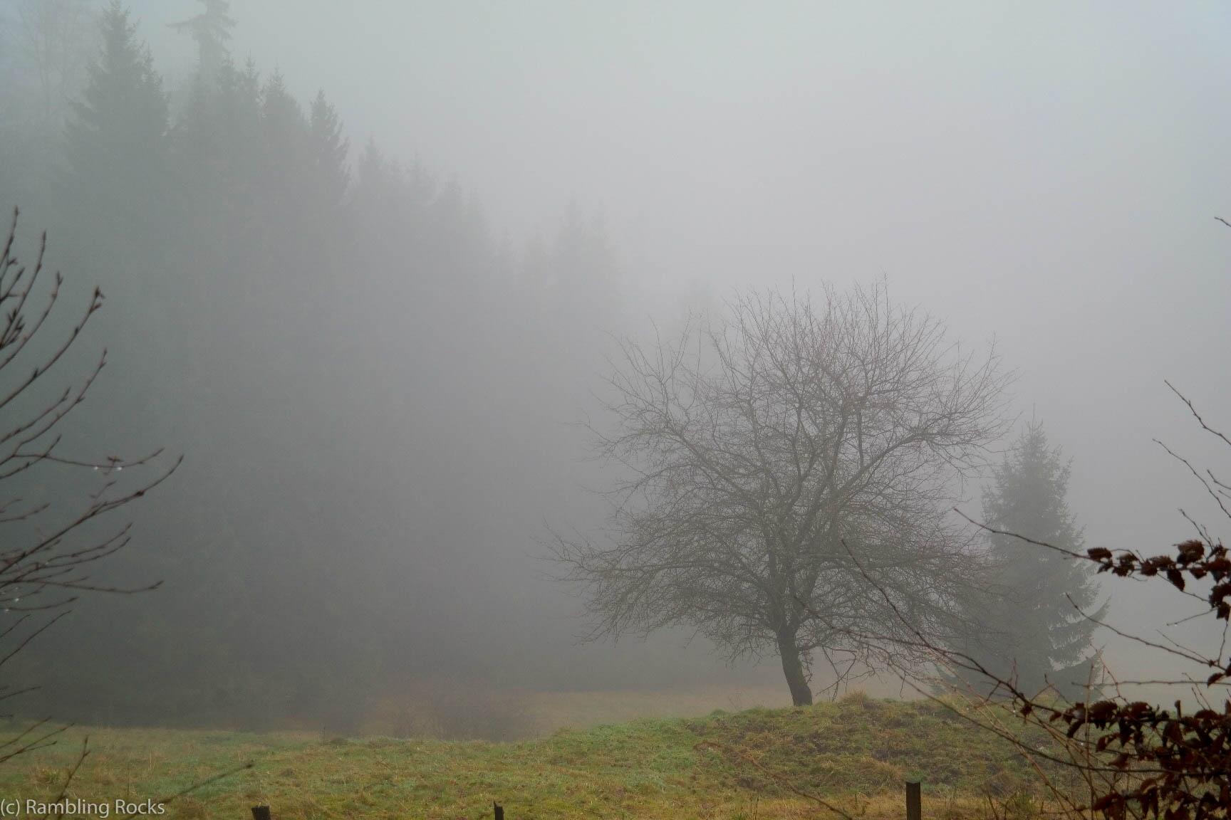 Nebelwiesen