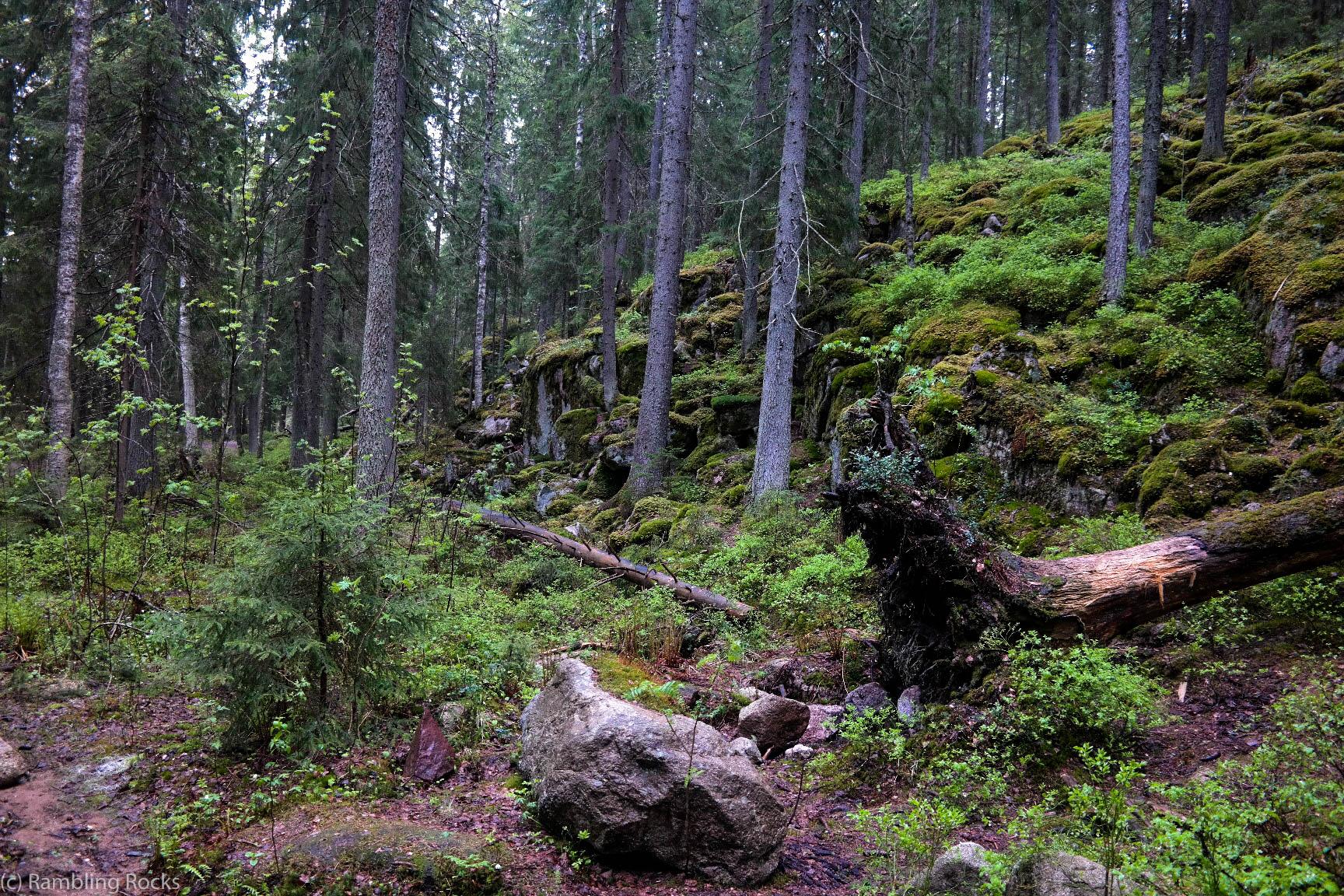 Wald von Nuuksio