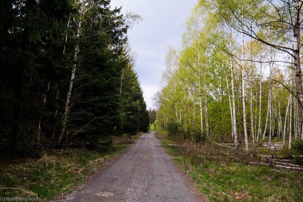 Wald Harz