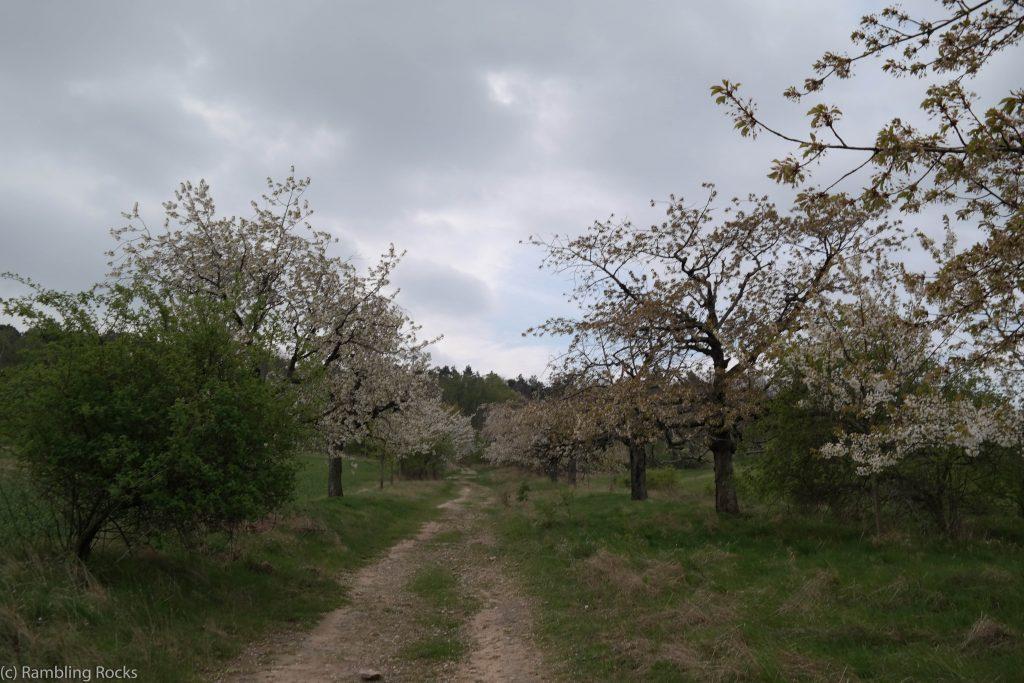 Obstbäume Gegensteine