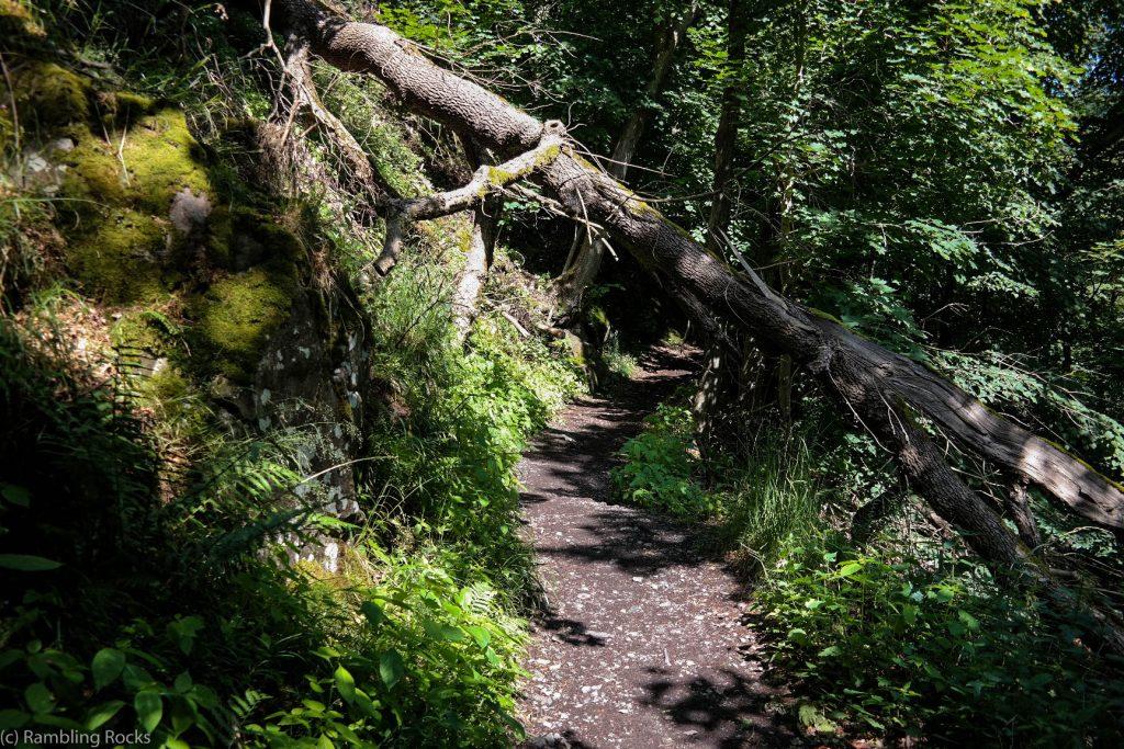 Wald im Bodetal