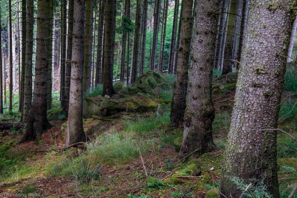 Wald bei Ilsenburg