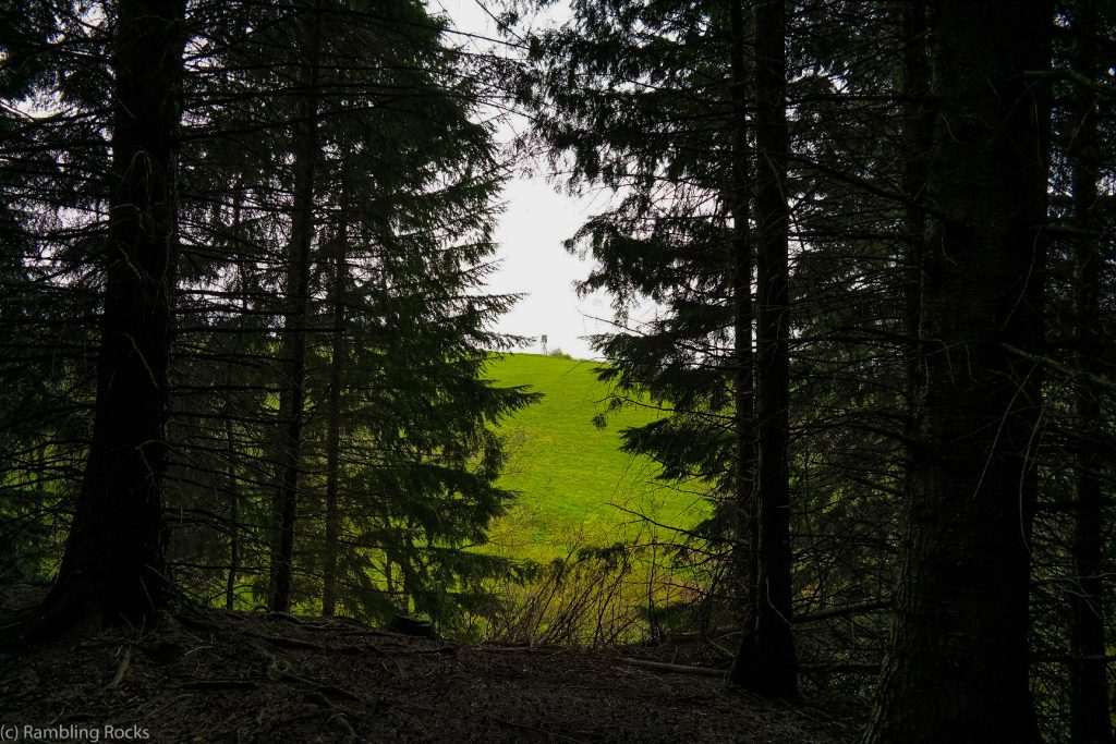 Blick durch Weltwald