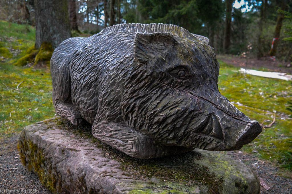 Wildschwein auf Försterstieg