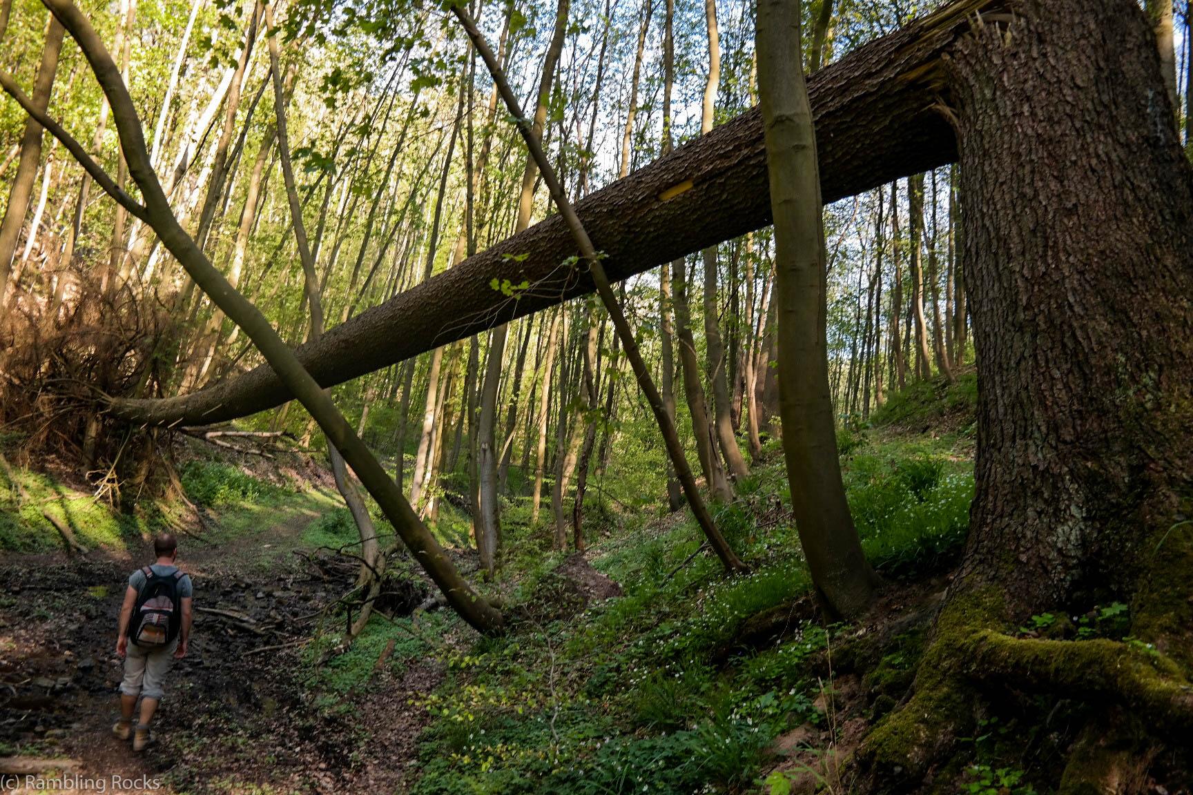 Wald bei Burg Falkenstein