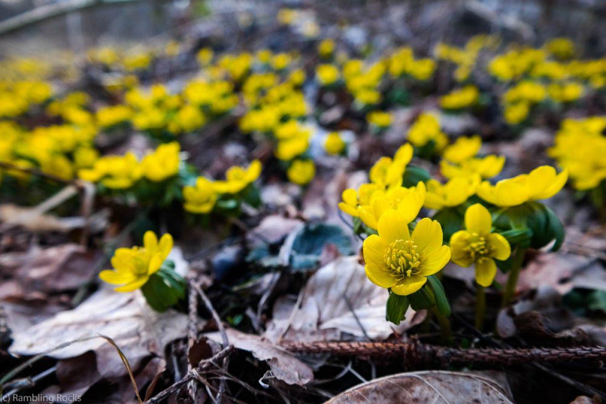 Der Phänologische Kalender: Der Vorfrühling