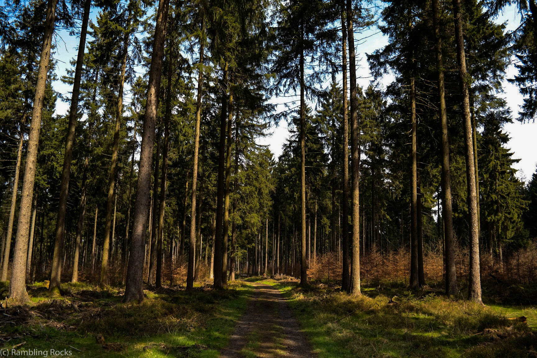 Harzer Wald